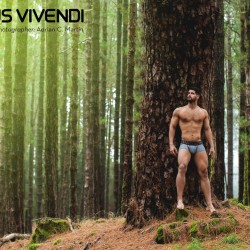 Modus Vivendi releases the Bear Collection