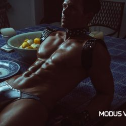 Wear your Modus Vivendi From Dusk Till Dawn